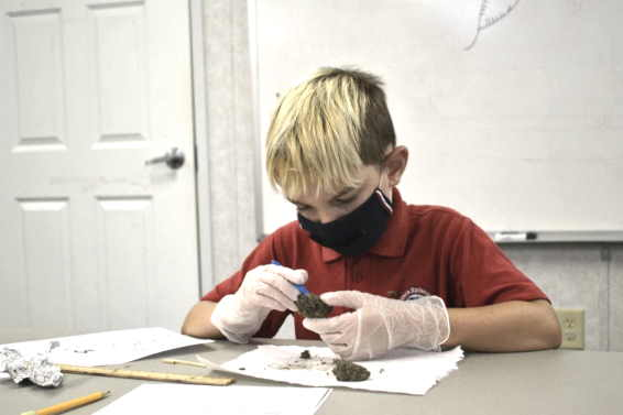 Student dissecting owl pellets