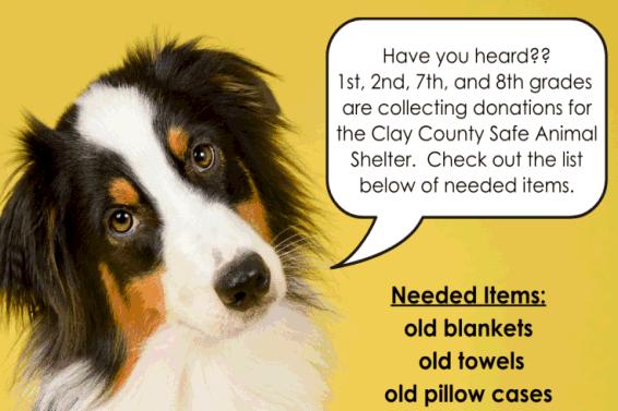 Safe Animal Shelter donation info